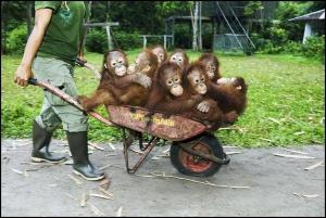Got apes?